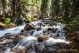 07-river-torrent-forest