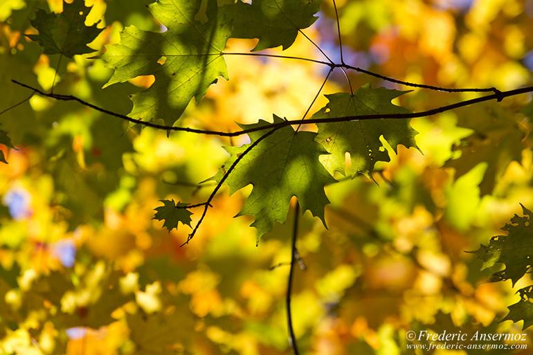 autumn-leaves-colors-021