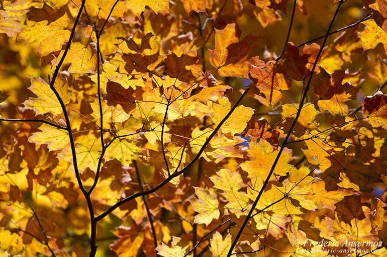 autumn-leaves-colors-022