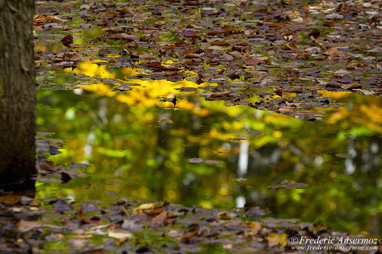 autumn-leaves-colors-023