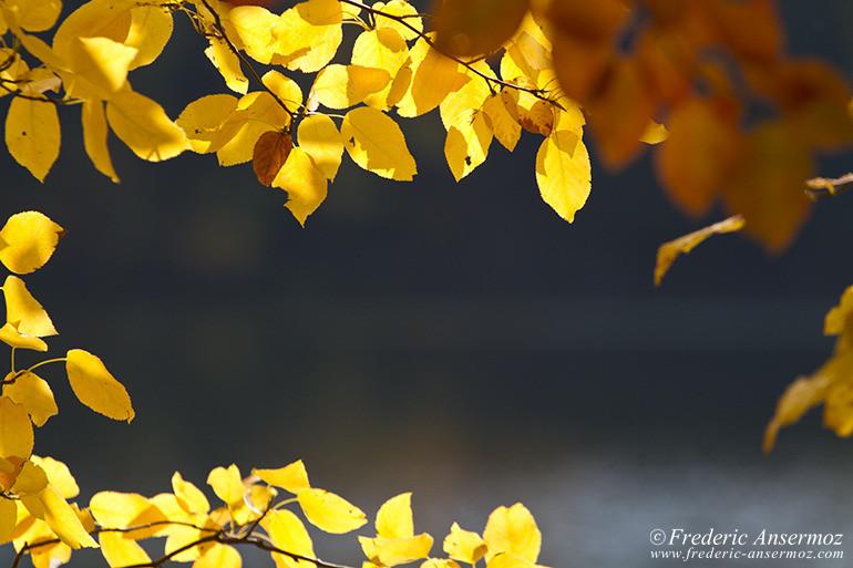 autumn-leaves-colors-024