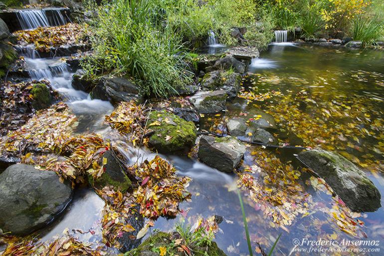 autumn-leaves-colors-026