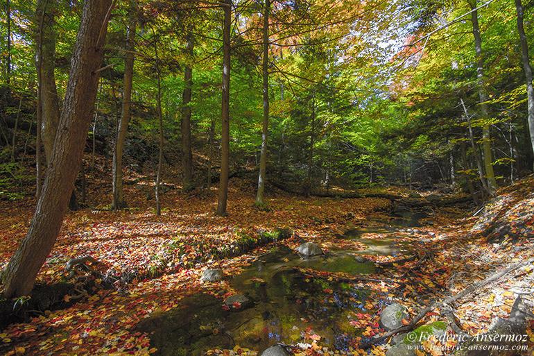 autumn-leaves-colors-027