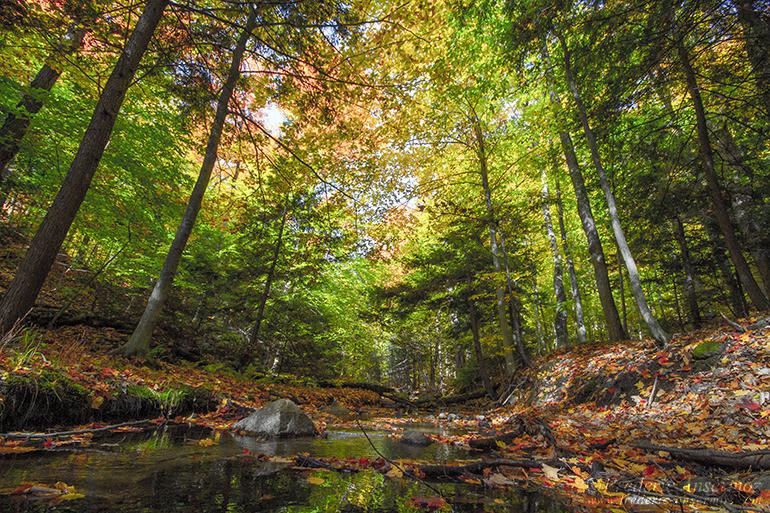 autumn-leaves-colors-028