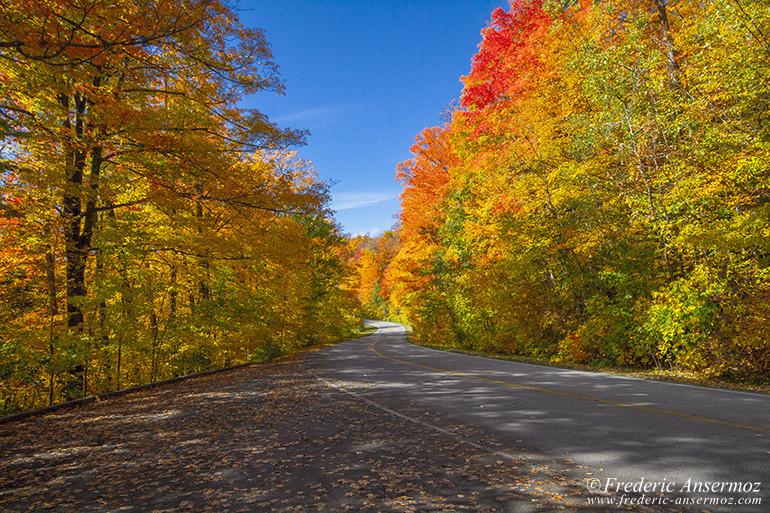 autumn-leaves-colors-029