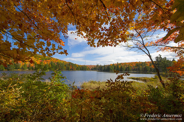 autumn-leaves-colors-030