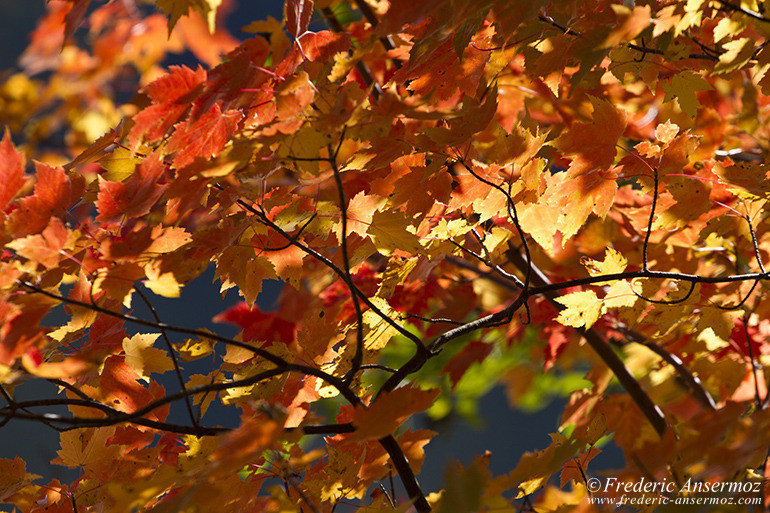 autumn-leaves-colors-038