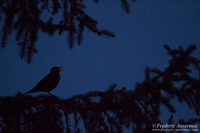 bird-silhouette
