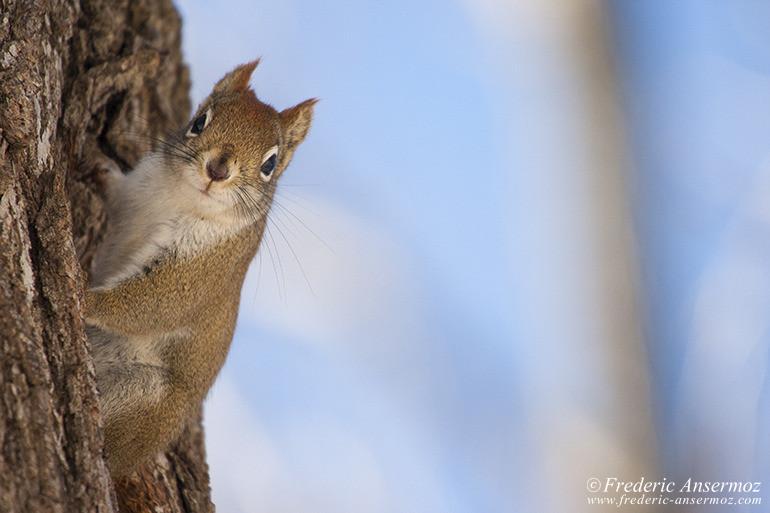 squirrel-looking