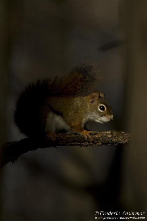 squirrel-shade