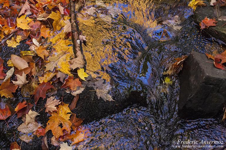 autumn-leaves-colors-002