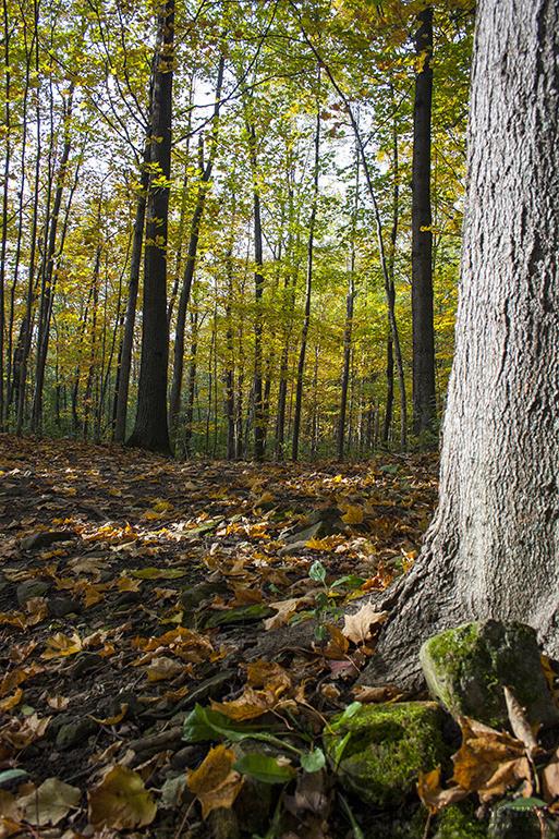 autumn-leaves-colors-004