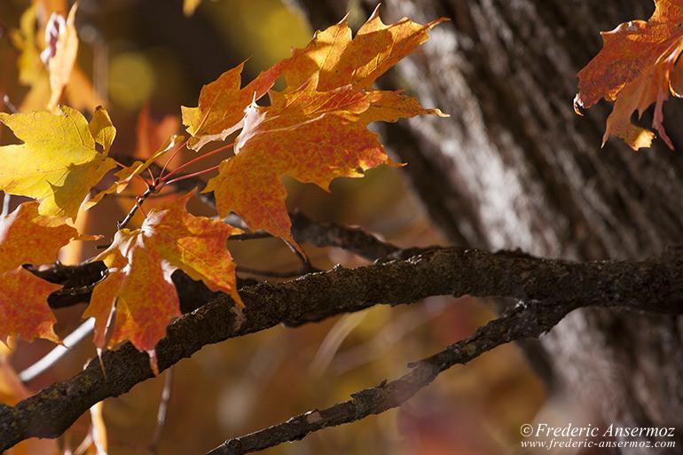 autumn-leaves-colors-006