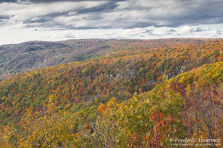 autumn-leaves-colors-009