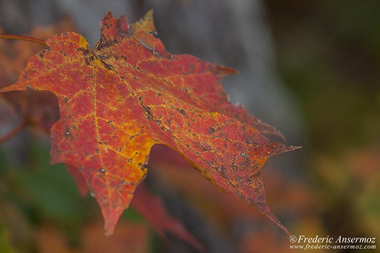 autumn-leaves-colors-010