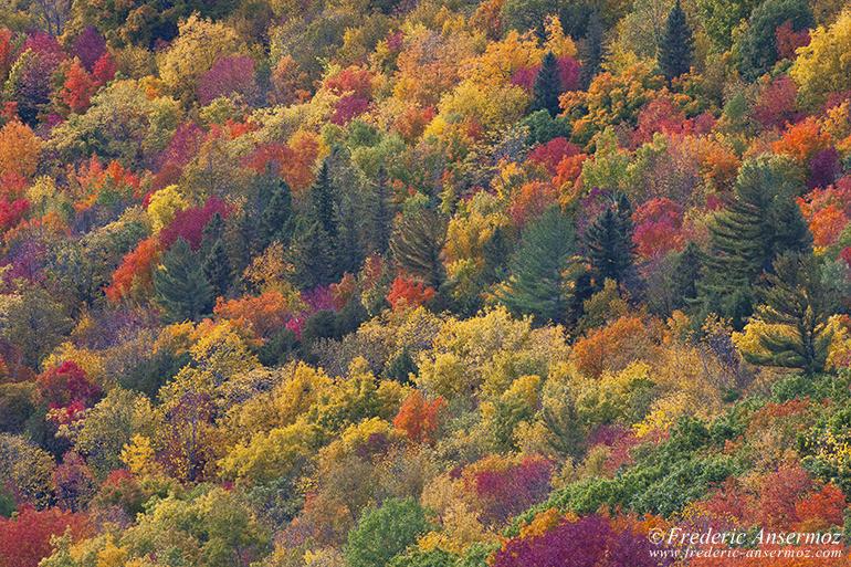 autumn-leaves-colors-011