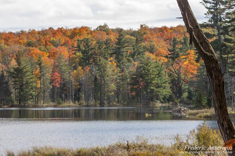 autumn-leaves-colors-012
