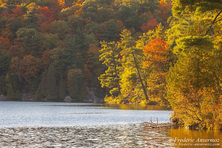 autumn-leaves-colors-013