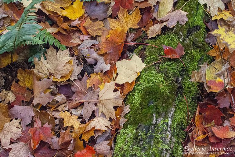 autumn-leaves-colors-014