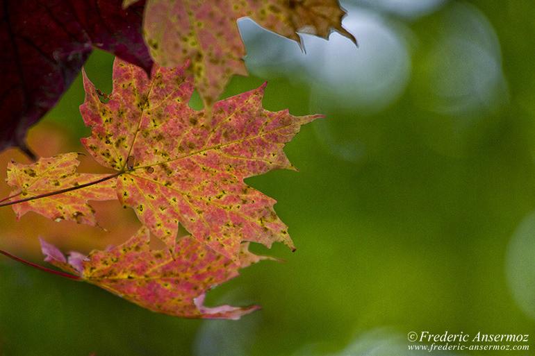 autumn-leaves-colors-015