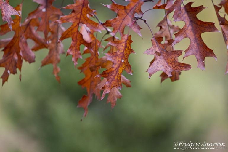 autumn-leaves-colors-016