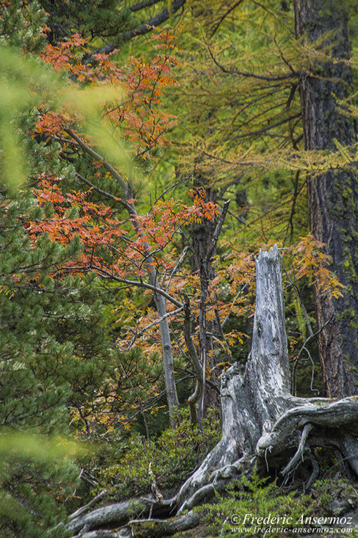 autumn-leaves-colors-018