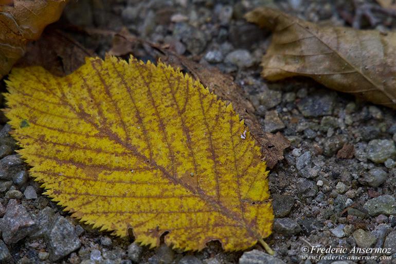 autumn-leaves-colors-020