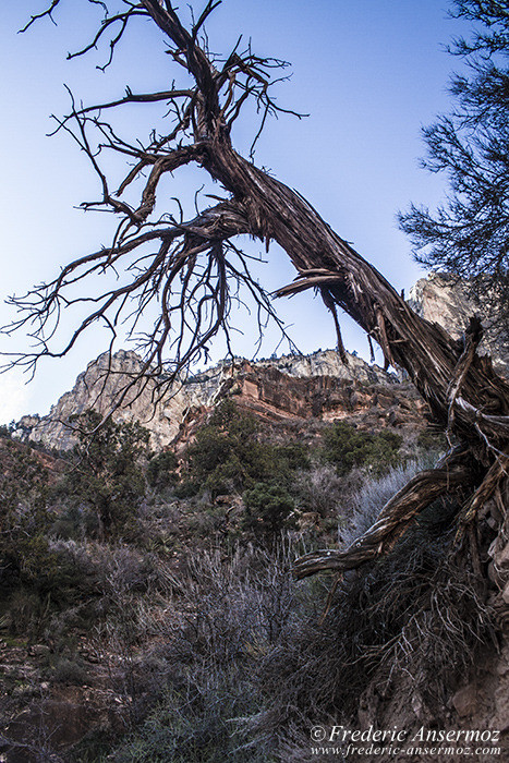 grand-canyon-0633