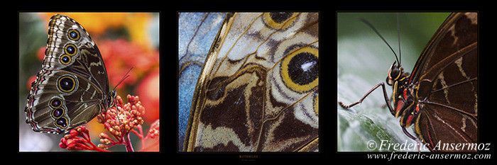 panorama-butterflies 002