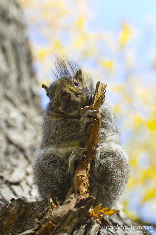 squirrel-from-under