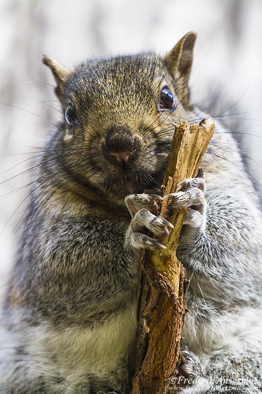 squirrel-portrait