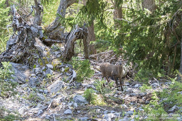 wildlife-red-deer-02