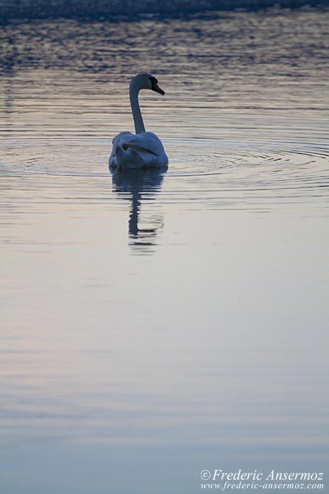 swan-river