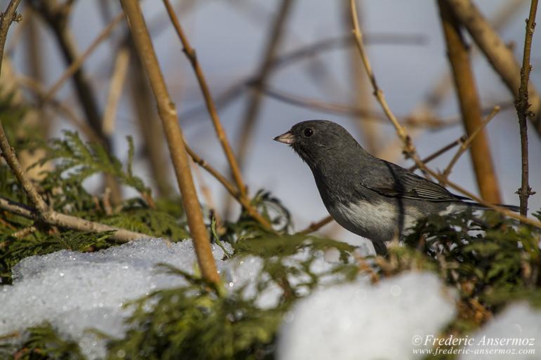 grey-bird-montreal