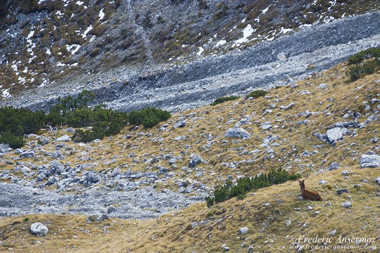zernez-national-park-19