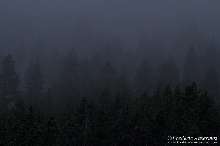 Forest trees silhouette
