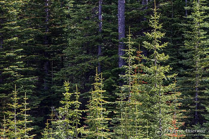 11 forest alberta