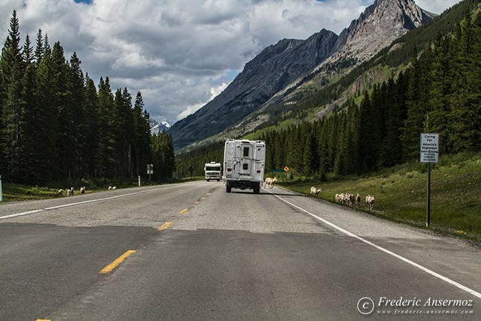 25 highway 40 alberta