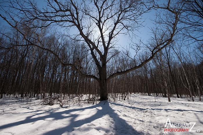 Arboretum morgan parc agricole 024