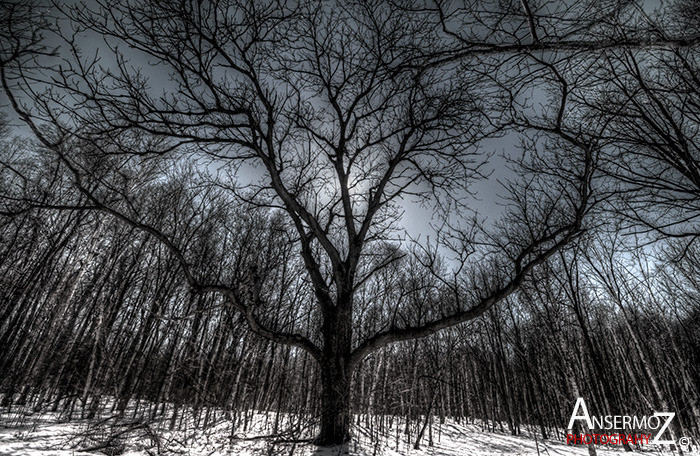 Arboretum morgan parc agricole hdr tree