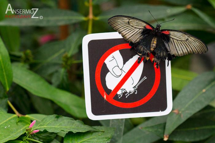 C7 Butterfly 287