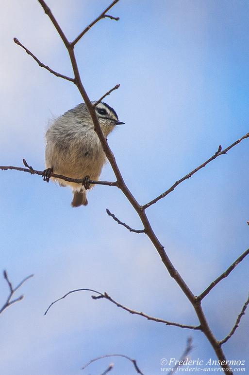 Bird arboretum montreal