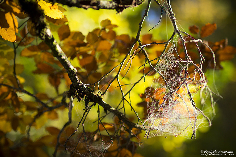 Spiderweb on a branch, Fall Season