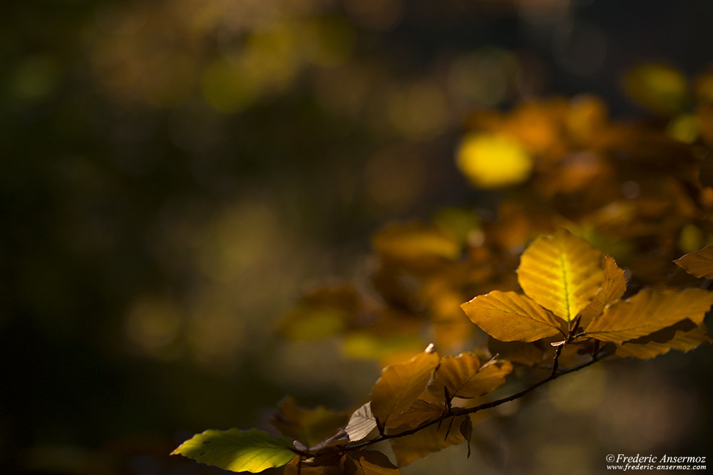 Light on Autumn leaf