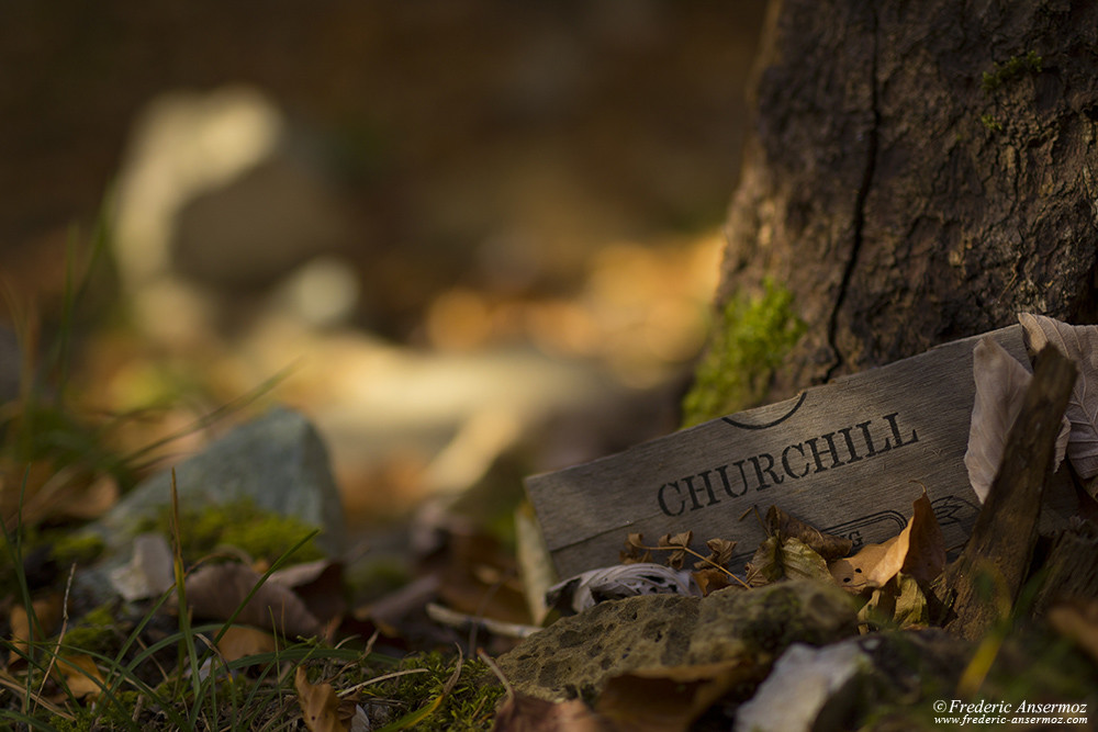 Autumn Mood, dead leaves, Chruchill board
