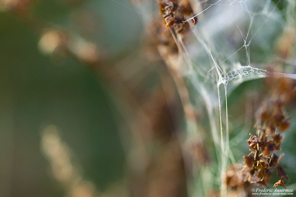 Spiderweb closeup