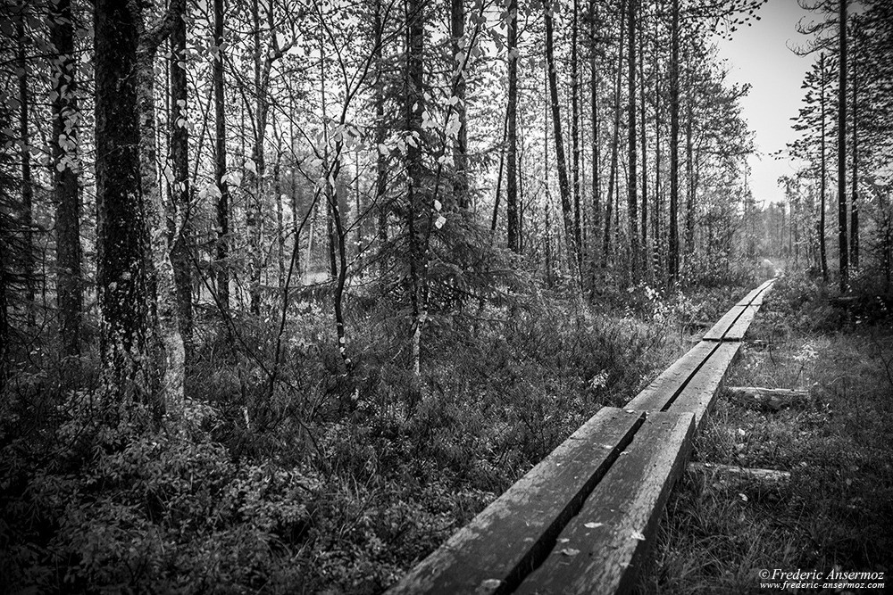 Boardwalk black and white photo, Oulanka, Finland