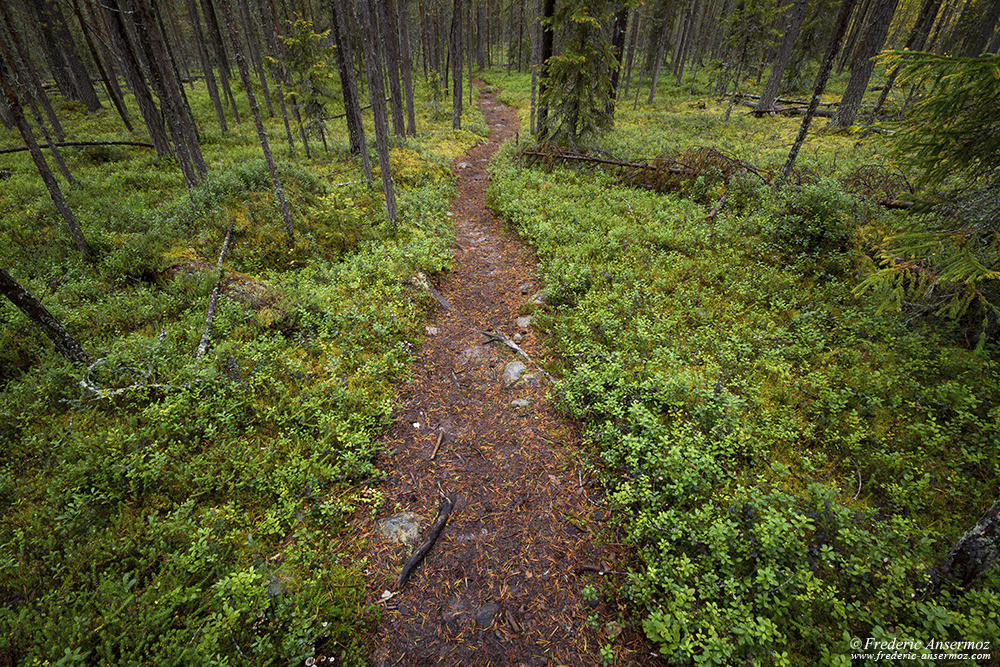 Hiking trail across boreal forest, Karhunkierros trail, Oulanka National Park