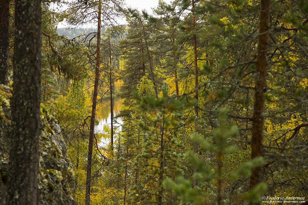 Boreal forest and river in Finland, Oulanka Park