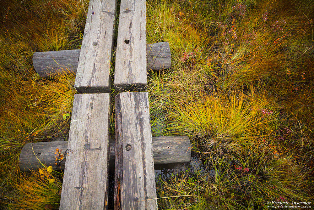 Peatlands in Finland, boardwalk
